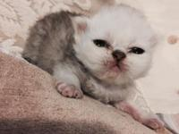 2 week old Angel Cake is available. please visit my