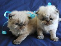 "NOTE: Watch the kittens' Facebook page ""Penny's"