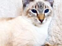 Cattery Closing due to Owner's health concerns. Adult