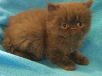 Now taking deposits- Kittens will be ready to leave at