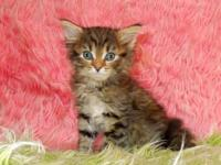 This is our brown spotted tabby girl Dory out of our