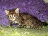 This is our brown spotted tabby girl Dory. She is a