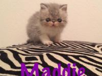 Catniss Cattery has adorable longhair kittens born on
