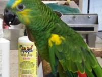 4 month old baby Chaco Blue front amazon. Weaned on