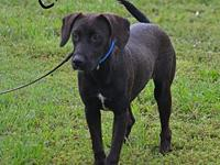 Chaco's story Chaco is a playful puppy looking for the