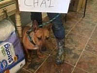 CHAI (19D-0026's story MEET CHAI! A 1-2 year old,