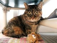 Chai's story Meet Chai, a sweet 3-year-old brown and