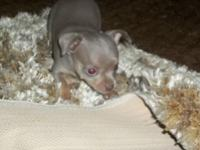 I have 3 Chihuahua puppies 2 females 1 male born July