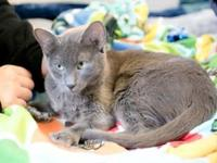 My story All of our cats go home spayed or neutered,