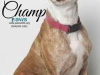 Champ's story Meet Champ. This sweet boy would make the