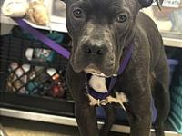 Champ's story Hi! I am Champ, a very loving and