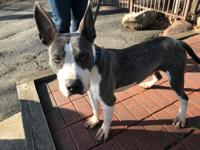 Champ is a young mixed breed available for adoption. He