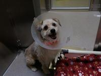 CHAMP's story Click here to learn more about my