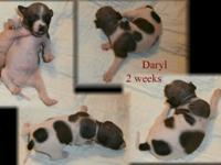 We have 2 girls and 1 male puppy available to accepted