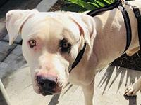 Chance's story This sweet boy was found abandoned in a