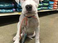 Chance is a fully vetted 4 month old adorable puppy he