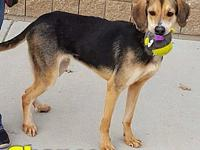 Chance's story Chance is a 1 year old, male, hound mix.