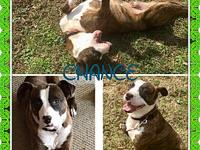 CHANCE's story Handsome hunky chance is looking for the