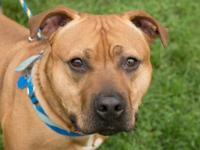 Chuck would love an active family to include him in all