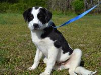 Chance is a good-looking 5 month old Mixed Breed puppy,