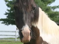 Chance is a USERL-rescued horse that we would like to