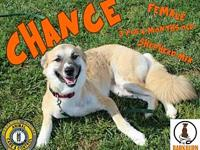 Chance's story You can fill out an adoption application