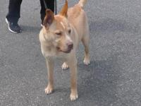 Chance's story Chance's adoption fee is $275. He has