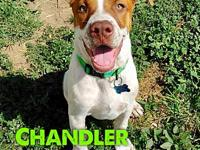 Chandler's story Chandler is a bouncy, happy, little