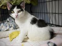 Chandley's story 6 mnth Spayed Female Domestic
