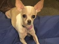 Chanel is a 2 year old 3 lb female chihuahua. Shes very
