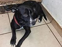 Chanel's story Chanel is a sweet girl that gets along