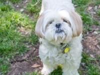 My name is Chanel a pretty little Shih Tzu. I'm looking