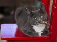 Chantelle18's story All Purr Partners Adoptable