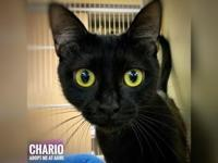 Chario's story Hi, I'm Chario! I'm a sweet young lady