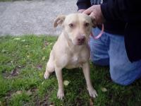 1 yr old female lab mix about 30 pounds. She is a