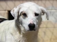 Charles is a 3 year old Retriever mix boy that weighs