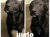 Charley Girl's Puppy - Panther (Hyde)'s story Hello, I