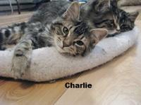 ~~Oliver, Charlie, Rascal and Max came in with their