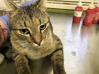 CHARLIE's story Clay County Animal Control Hours of