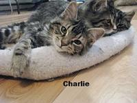 Charlie's story ~~Oliver, Charlie, Rascal and Max came