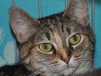 Charlie's story Charlie and Kiki are a bonded pair and
