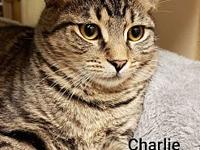Charlie's story Come meet this guy at the Petsmart in