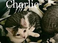 Charlie's story These guys are very energetic and
