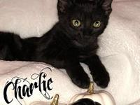 Charlie's story Charlie who is more of a cuddly love