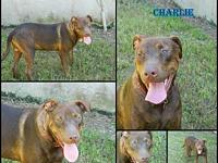 charlie's story Poor charlie use to have a home. He was