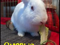 CHARLIE This young male New Zealand rabbit was