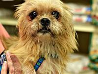 Charlie's story Charlie is a senior shih tzu or mix who