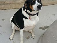 Charlie's story Charlie is a male Treeing Walker