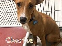 My story Charlie Brown is a charming 7-9 month old