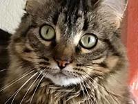 My story Hi my name is Charlie and I am a Main Coon